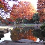 """秋を表す言葉 """"fall"""" """"autumn""""は、どっちを使う?"""
