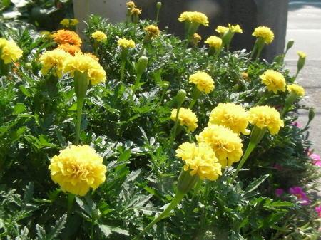 花のイメージ