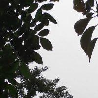 雨模様の空