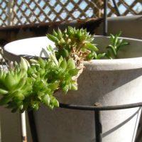 植物のイメージ