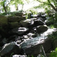 中自然の森