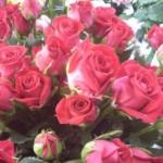 ホワイトデーをロマンチックにするためにおすすめ、108本のバラの花束
