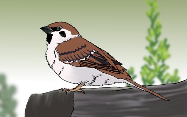 雀のイメージ