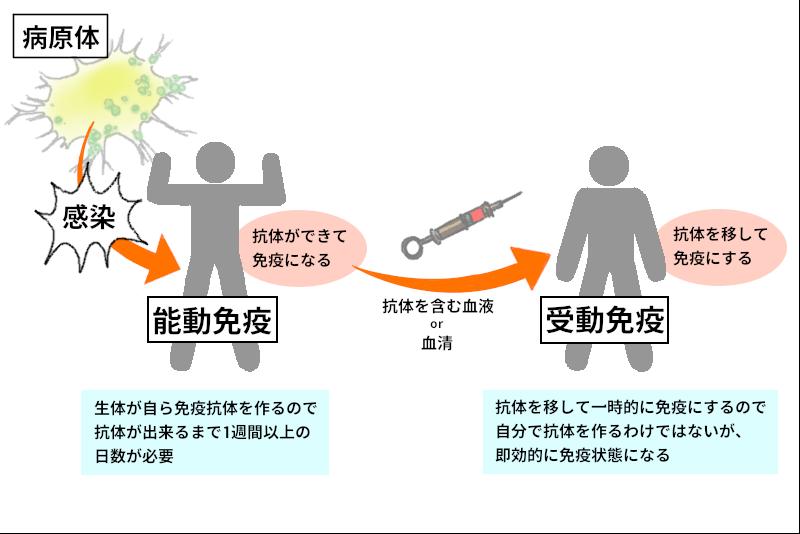 能動免疫と受動免疫