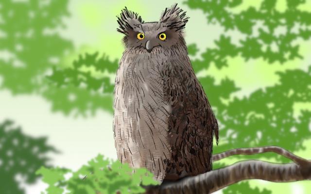 シマフクロウのイメージ